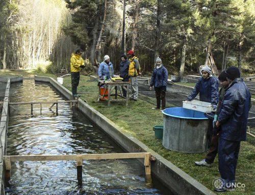 El aumento de la producción de truchas demandará más acuicultores. #Bariloche #UNCo.