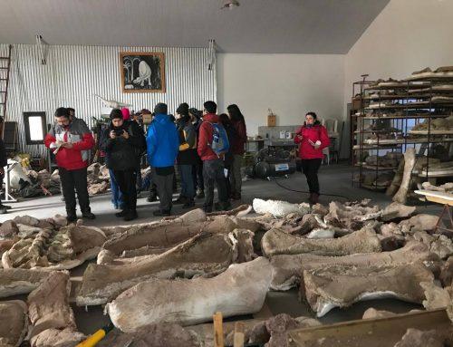El Museo de Ciencias Naturales de la UNCo, en conjunto con la Universidad Andrés Bello de Concepción, Chile tuvieron tres intensas jornadas de paleontología en Neuquén. #UNCo