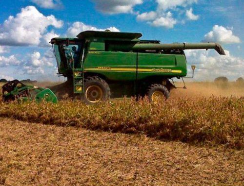 El monopolio en los cultivos amenaza la producción agrícola mundial. Pese al aumento de la dependencia de polinizadores en la agricultura, la falta de diversidad de cultivos puede amenazar la producción en los próximos años.